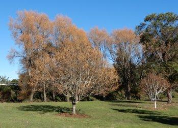 8.autumn tree