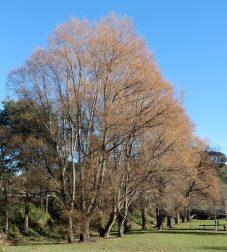 9.autumn tree