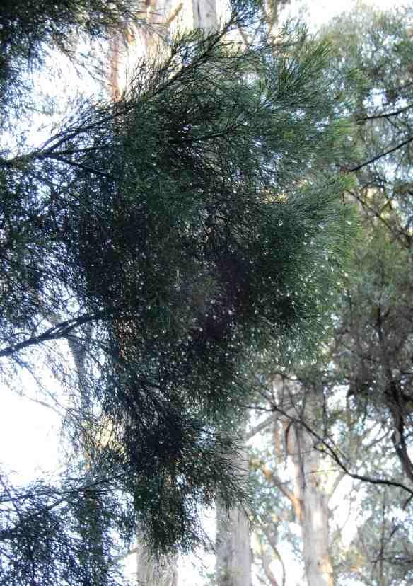 2.dewdrops