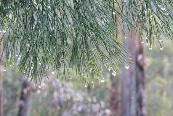 4.dewdrops