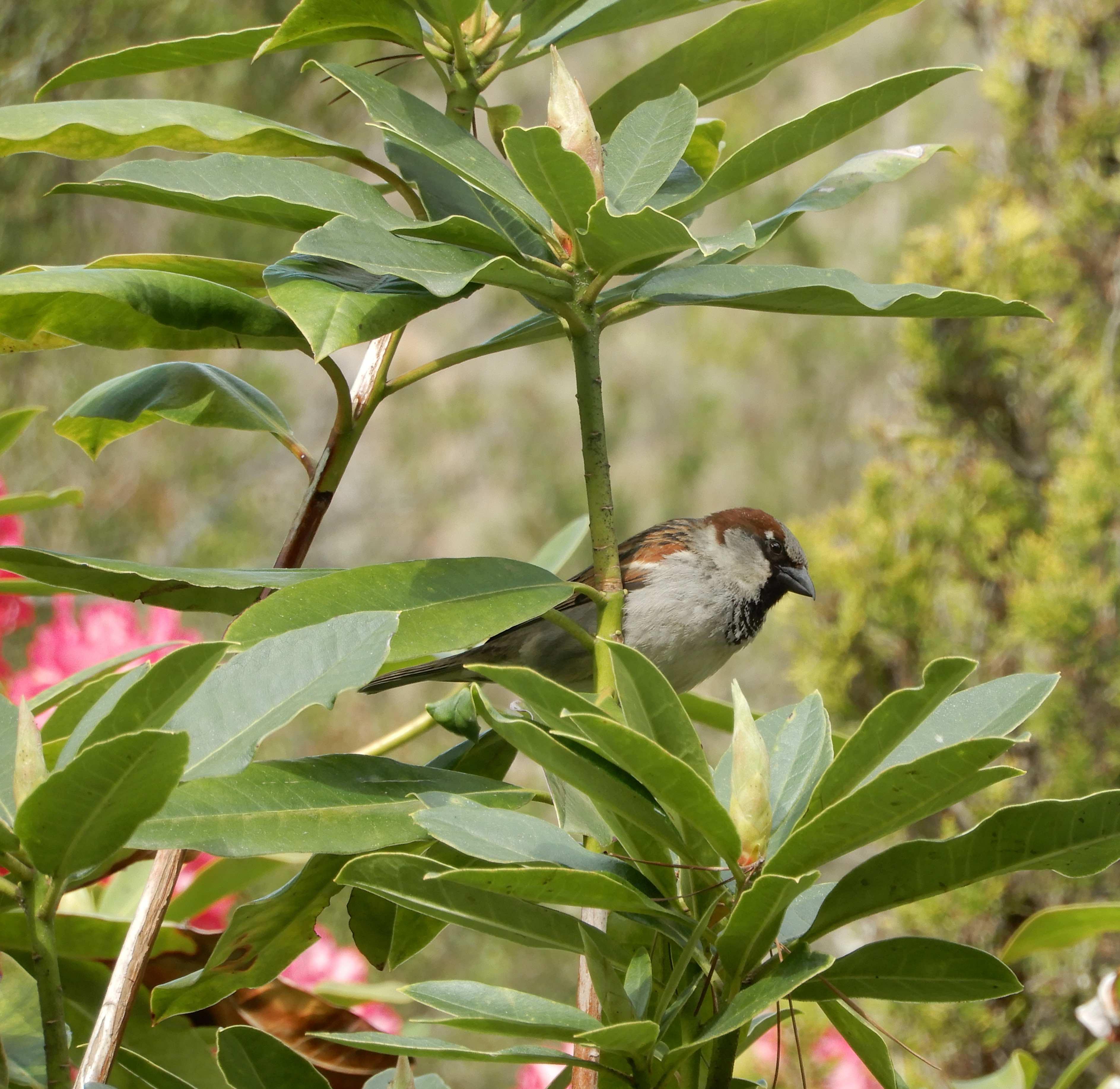 9.sparrow