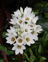 12.white flowers