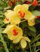 13.orchids