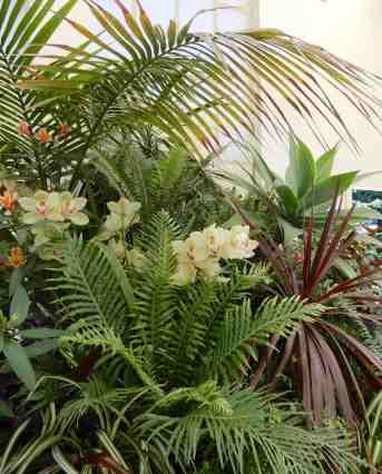 17.orchids