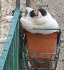 20.planted cat