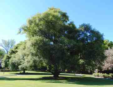 25.trees