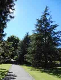26.trees