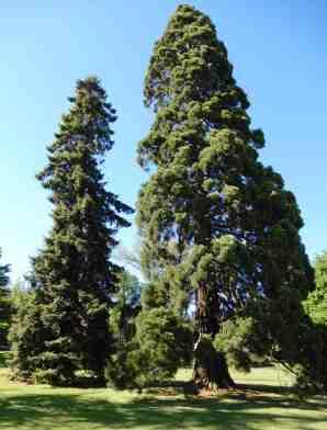 28.trees