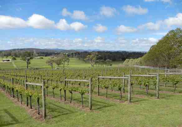 38.Moores Hill Vineyard