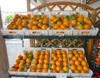 9.oranges