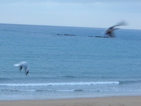 25.gulls
