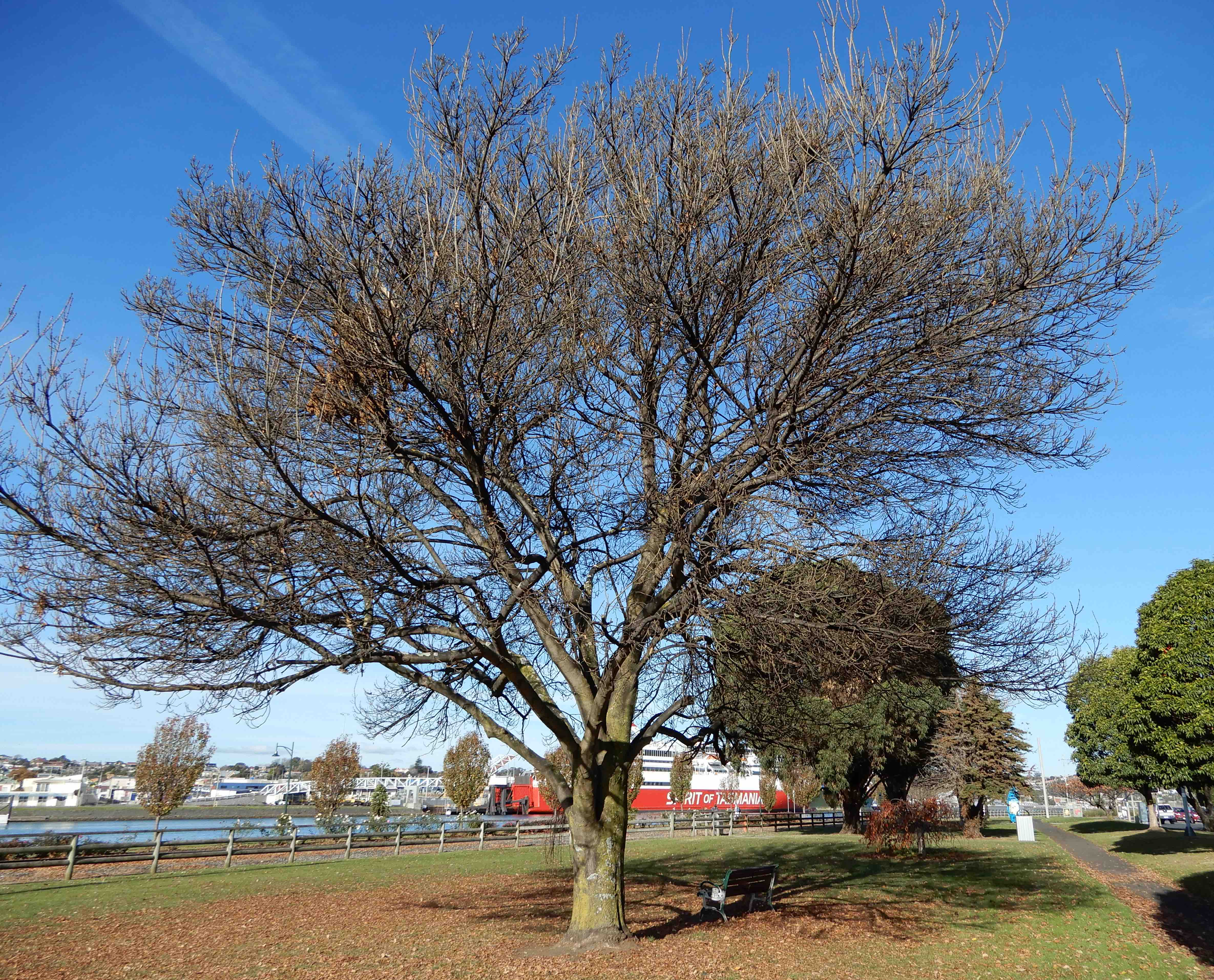 10.tree