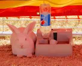 12.bunny