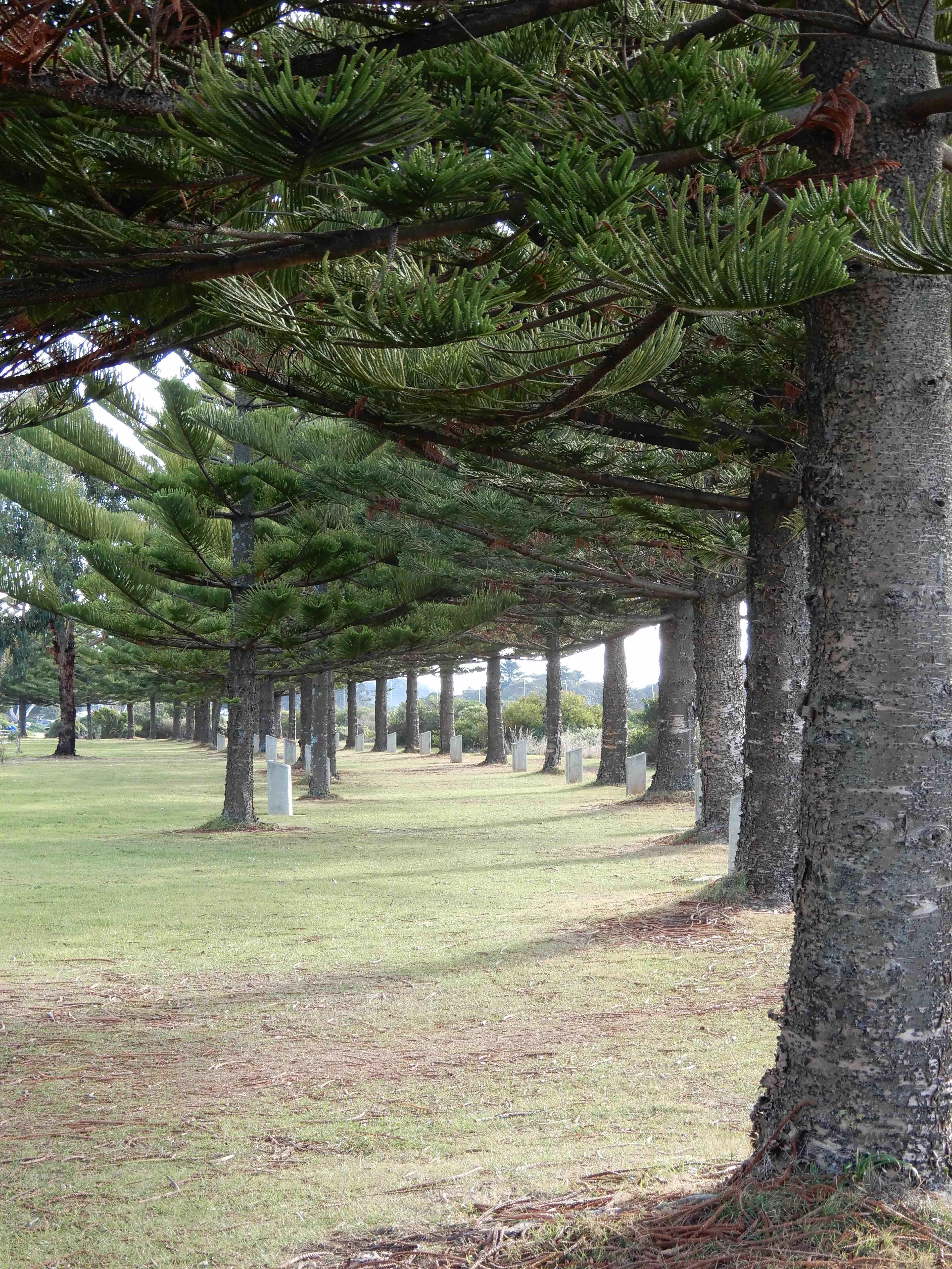 28.Norfolk Pines memorial