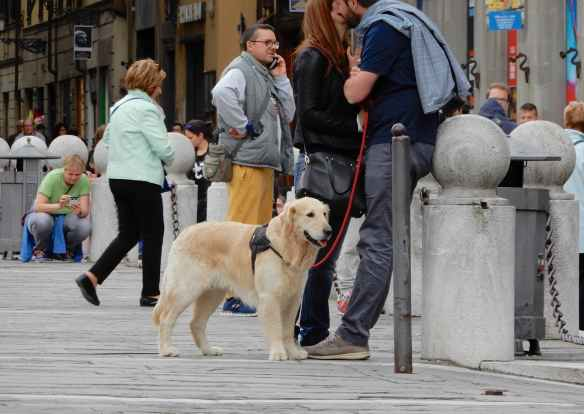 4.Golden Retriever