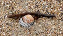 10.shell