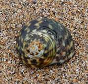 11.shell