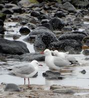 27.gulls