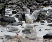 28.gulls