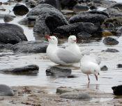 30.gulls