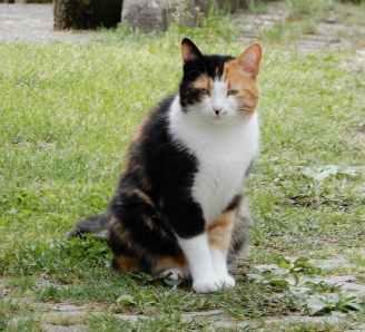 39.Puss,Vergemoli
