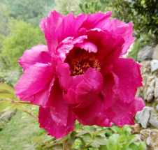 54.garden
