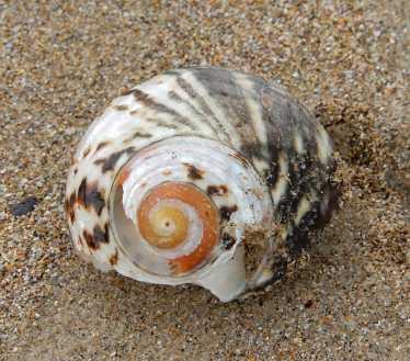 8.shell