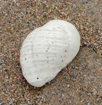 9.shell
