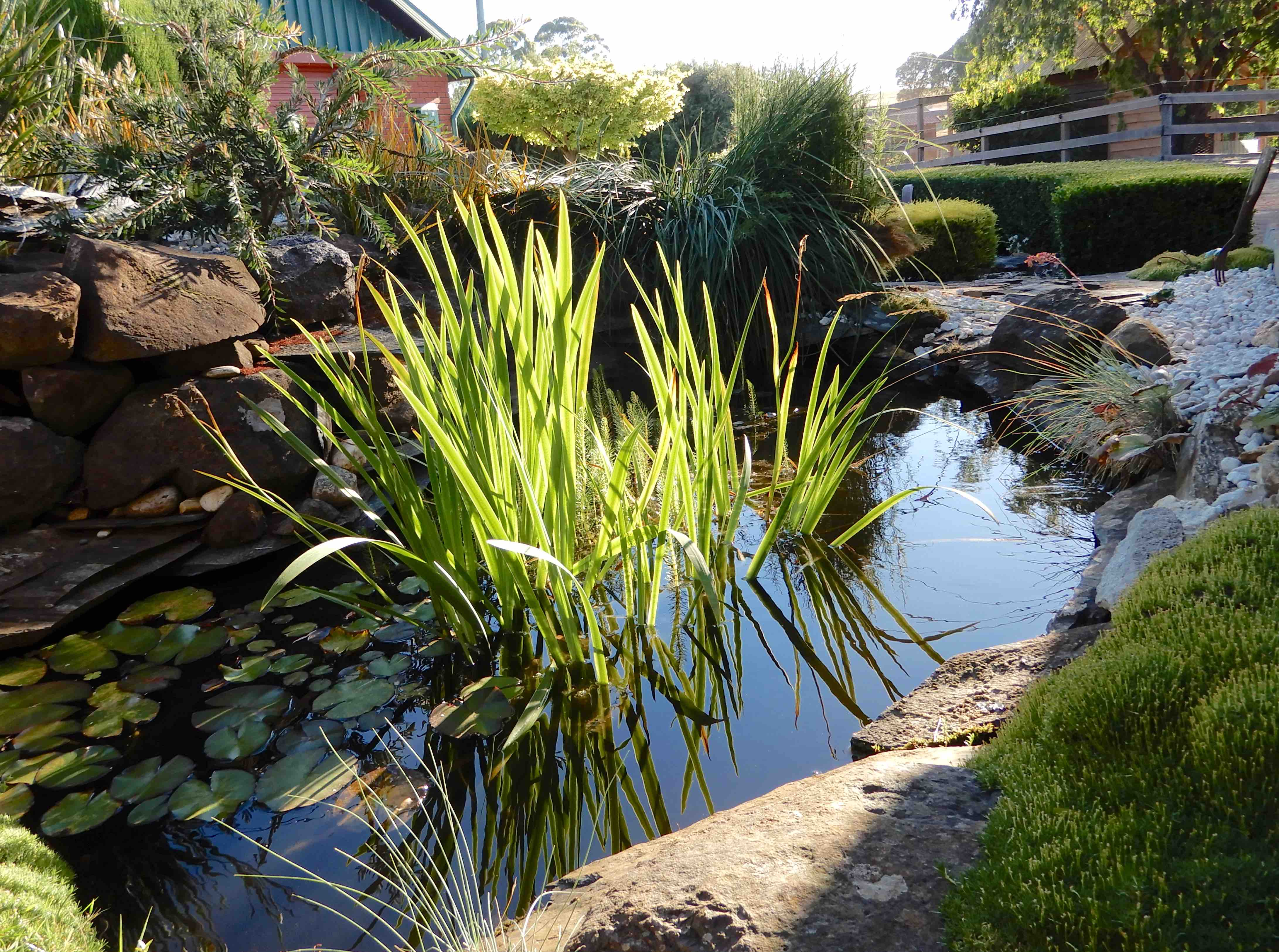 2.pond paradise
