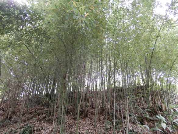 15.Bamboo walk