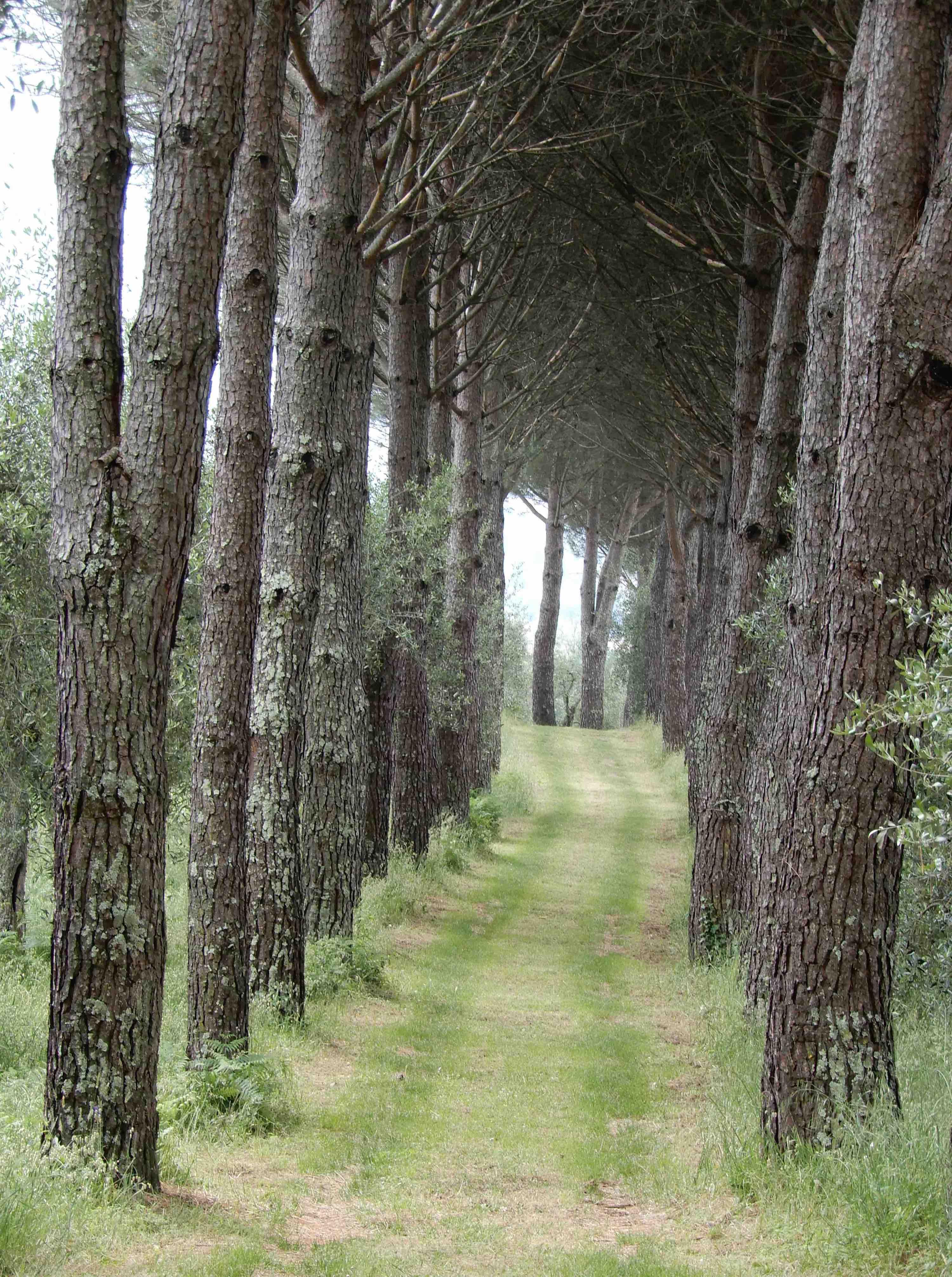 8.Pine walk