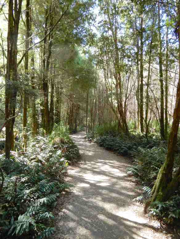 1.Nelson Falls Nature Trail