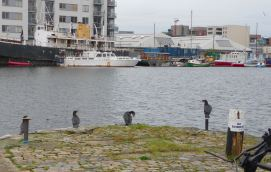 11.cormorants, Grand Canal Docks