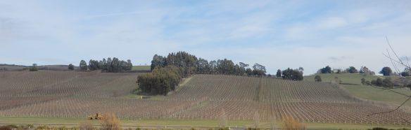 14.vineyard