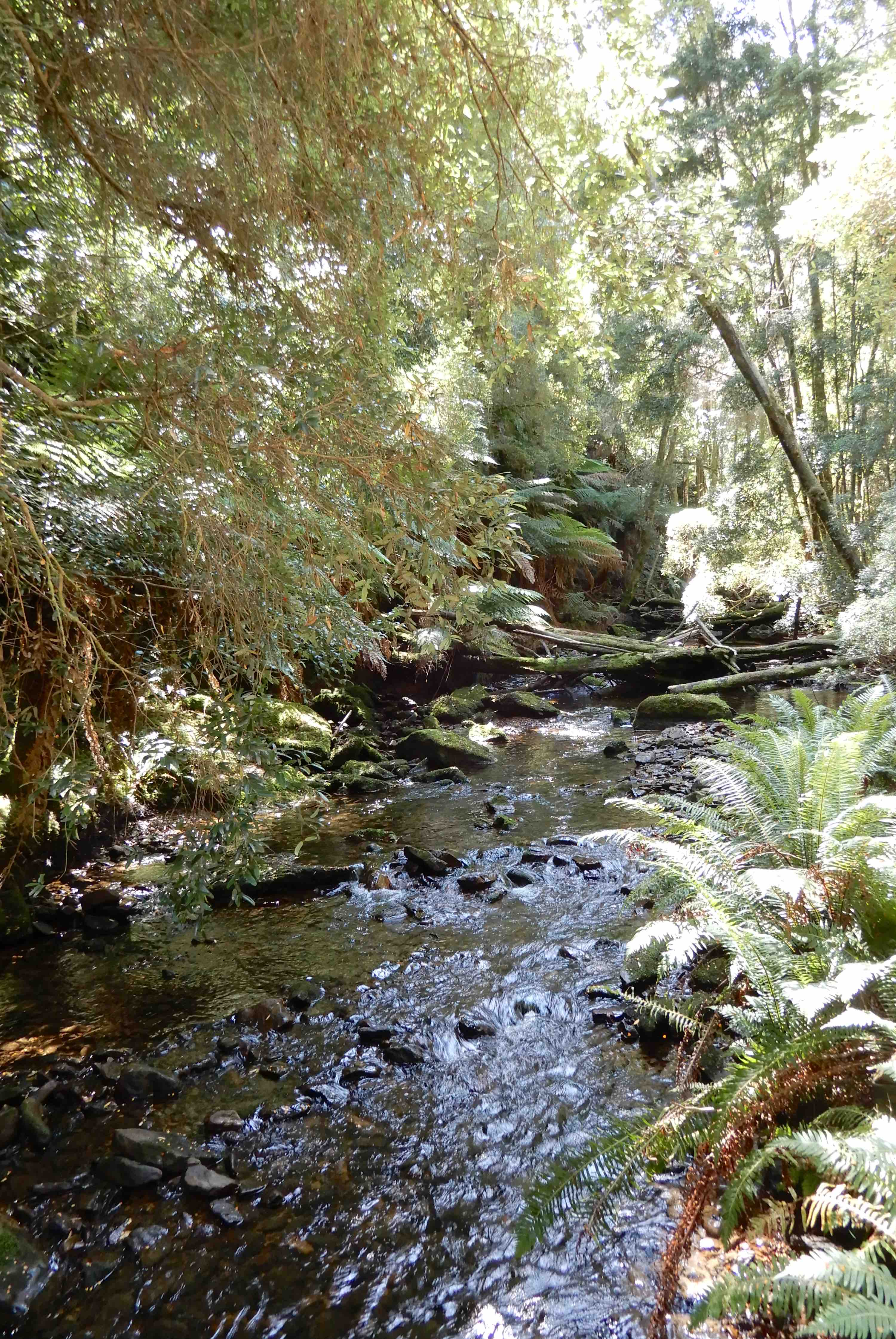 3.Nelson River