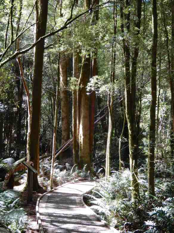 4.Nelson Falls Nature Trail