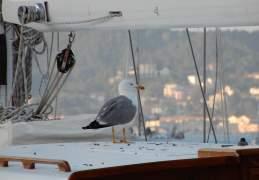 29.seagull