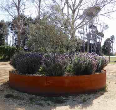 2.lavender & olive