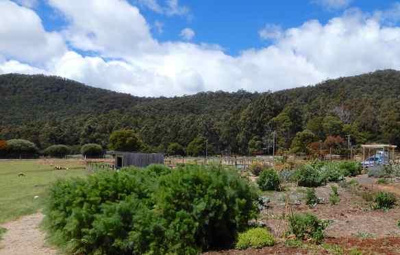 20.Wild garden & Dial Range