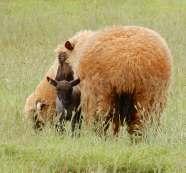 28.new lamb