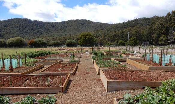 39.vegetable patch