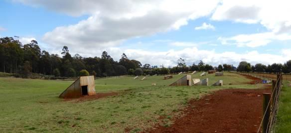 40.pig pastures