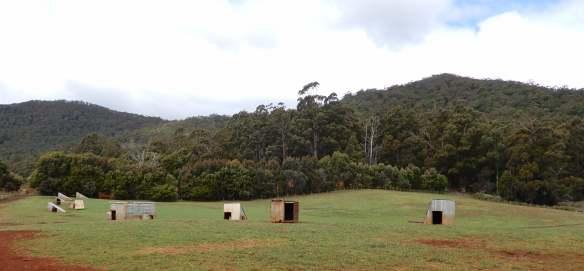 41.pig pastures