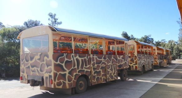 2.Safari Bus