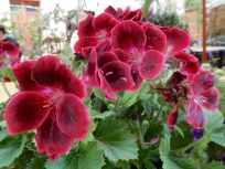 10.flowers