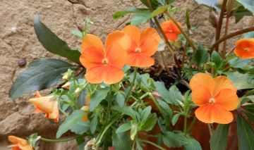 16.flowers