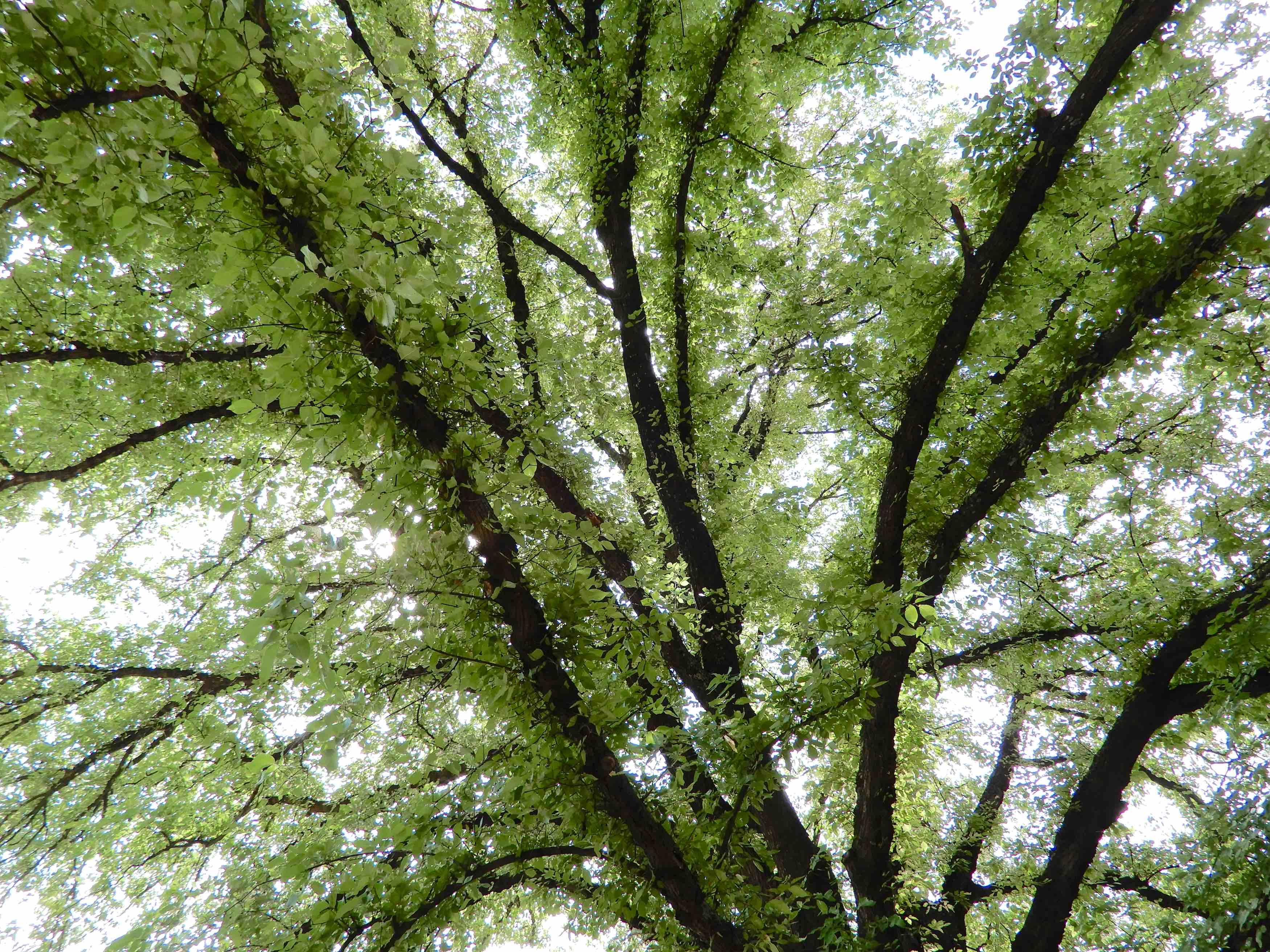 17.tree canopy