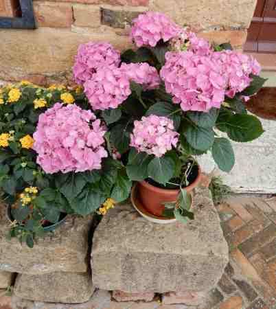 4.flowers
