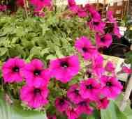 9.flowers