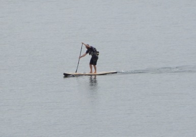 24.paddle boarder